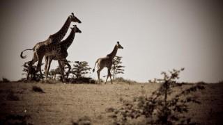 Safari Tours Tanzania | Tanzania