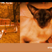 Abertawe Country Hotel for Cats | Glais, Swansea